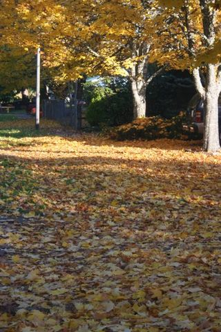 Leaves Fall IMG_3504