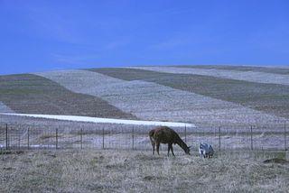 Farm Lama Goat IMG_0026_2