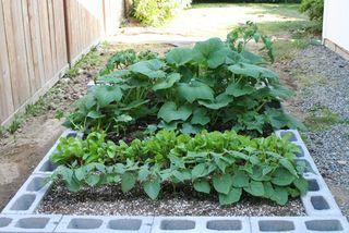 Garden 7-13-09 IMG_9106