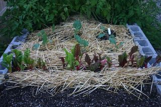 Straw Raised Bed IMG_3991