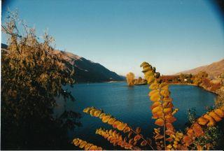 Orondo 2002 Leaf