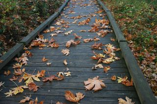 Fall Leaves on Walkway