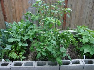 Garden in Aug Side View