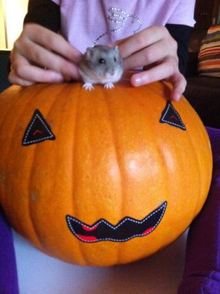 Hampster and Pumpkin