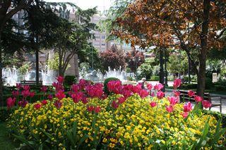 Logrono Park Flowers