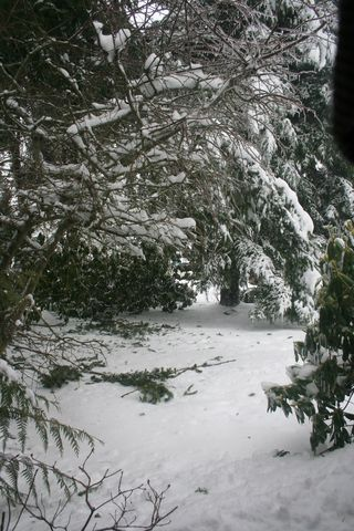 Branches Down in Snow