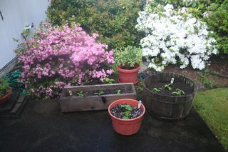 Patio Garden With Flowers