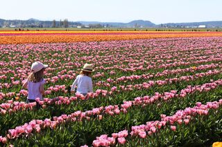 Tulips Two Girls IMG_1892