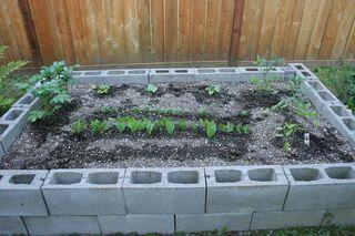 Garden New IMG_8209