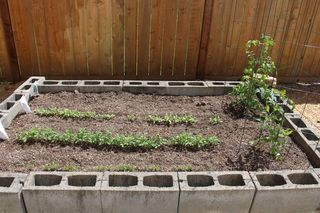 Garden Just Coming Up IMG_0237