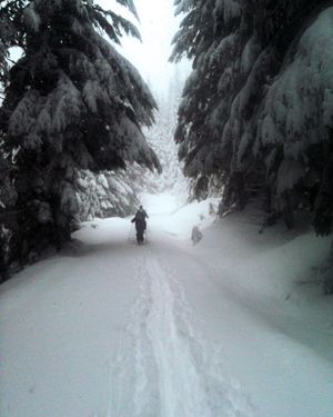 Snow on Trail With Skiier amp_rec_promo_snow