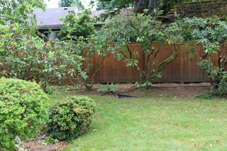 Rhodies Pruned No Clippings IMG_0227