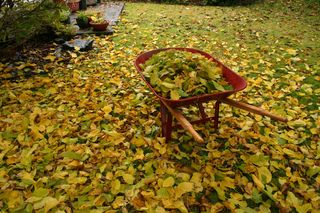 Fall Wheelbarrel