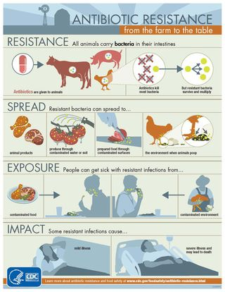 Antibiotic Use in Animals ar-infographic-950px-thumb-500x646-17666