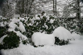 Snow 6a00e55008157688340167610a71aa970b-pi