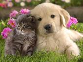 Cat and Dog ACC-petfriends