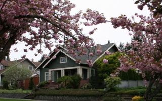 Olympia House Flowering Trees