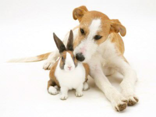 Rabbit and Big Dog Brown and White