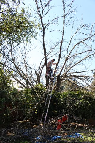 Dean Cutting Tree 1 IMG_4541