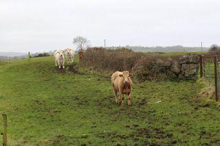 Henry Baylee's Farm