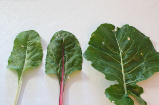 Brown Spots on Vegies