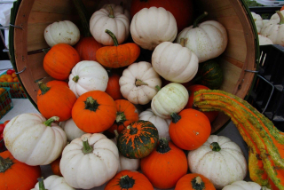 White and Orange Pumpkins