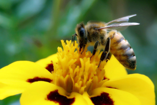 Bee-4075120_1920