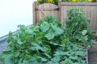 Garden-With-Collards-and-Tomatoes-600x400