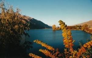 Orondo Fall Foilage at Edge of Columbia River 2002