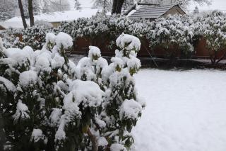 Snow 2-4-19