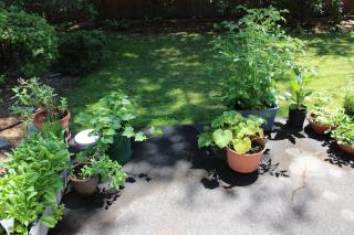 Garden 7-14 IMG_3875