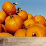 Bloggers embrace fall and its activities, including voting and pumpkin surprises