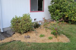 Straw in Flowerbed Day Backyard